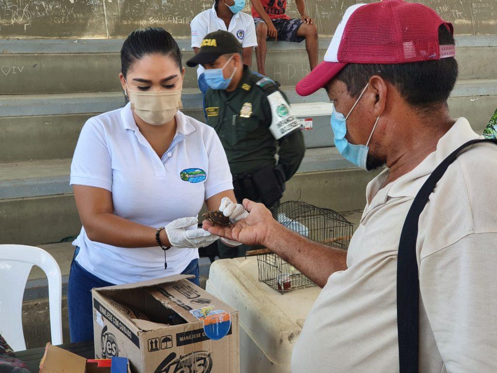 Más de 800 animales silvestres han sido liberados por Corpamag en lo que va del 2021 - Noticias de Colombia